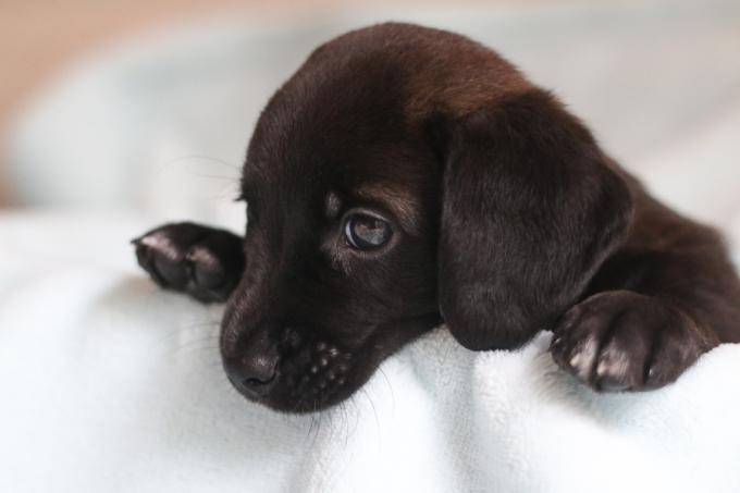 newborn pet